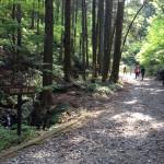 小仏峠に向かう登山道